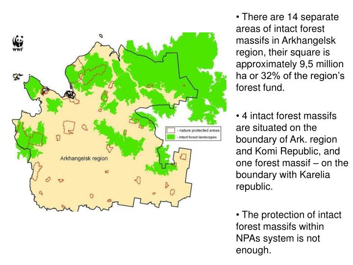 There are 14 separate areas of intact forest massifs in Arkhangelsk region, their square is approximately 9,5 million ha or 32% of the region's forest fund.
