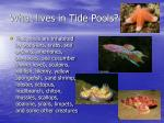 what lives in tide pools