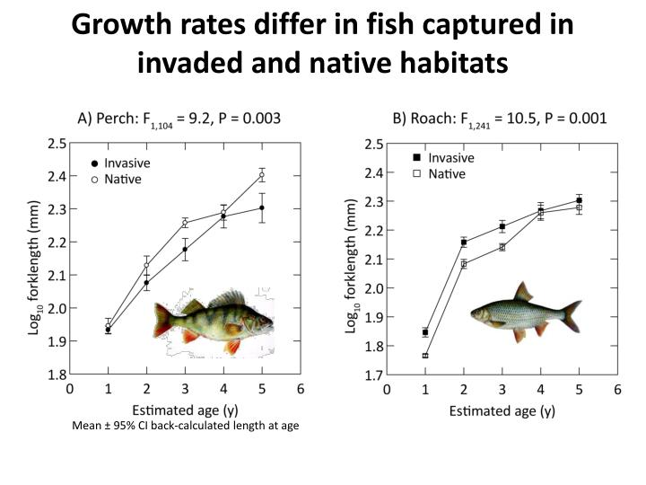Growth rates differ in fish captured in invaded and native habitats