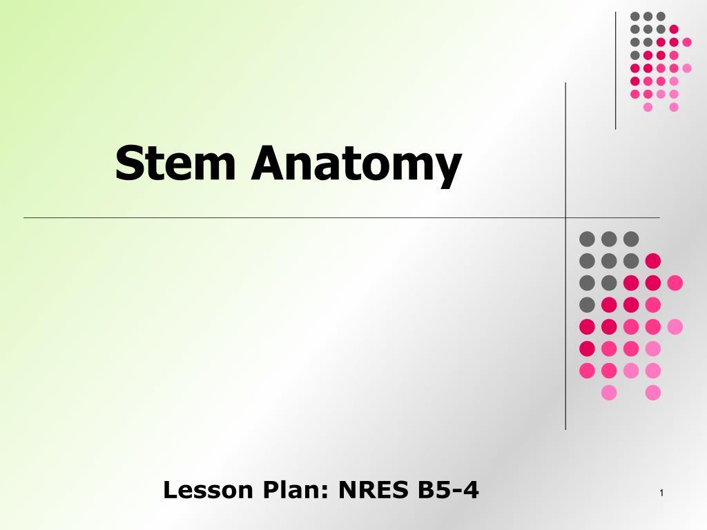 Ppt Stem Anatomy Powerpoint Presentation Id4460805