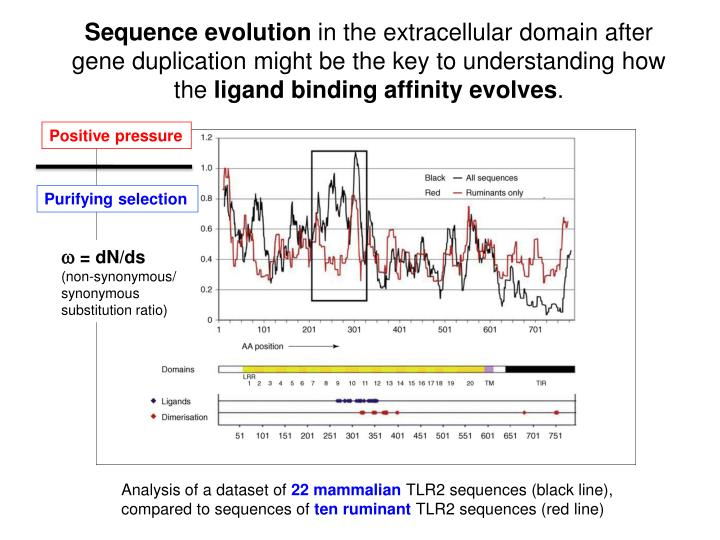 Sequence evolution