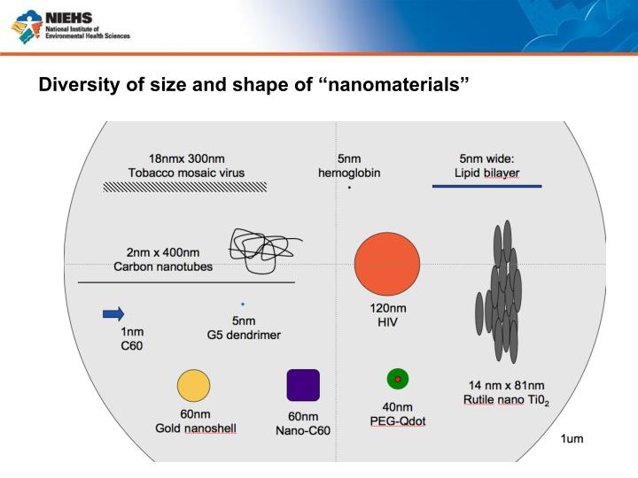 """Diversity of size and shape of """"nanomaterials"""""""
