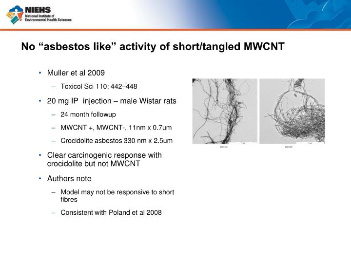 """No """"asbestos like"""" activity of short/tangled MWCNT"""