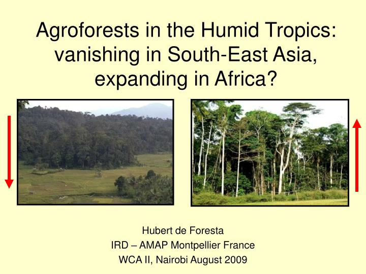 agroforests in the humid tropics vanishing in south east asia expanding in africa n.