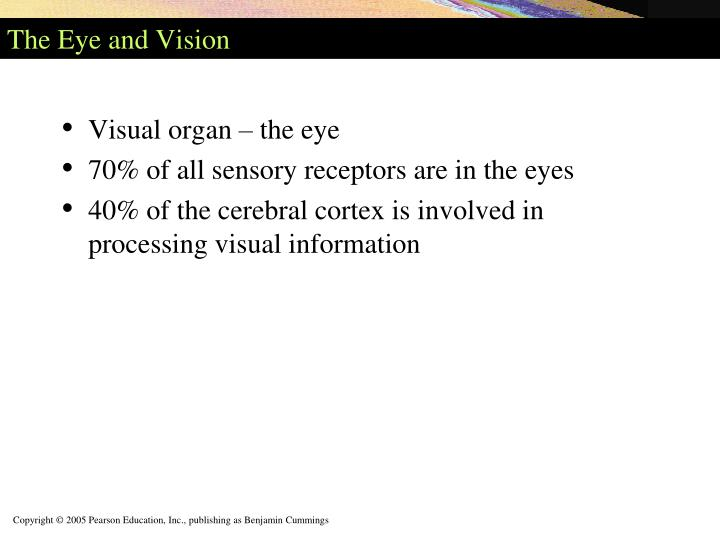 The Eye and Vision