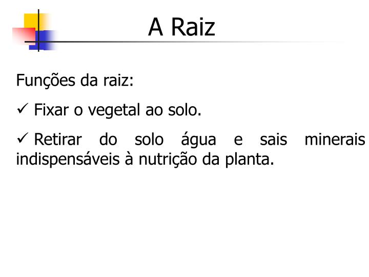 A Raiz