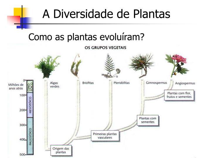 A Diversidade de Plantas
