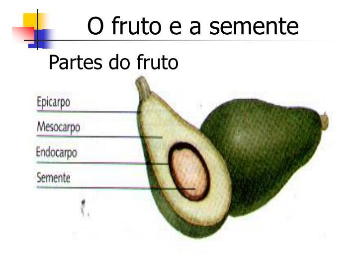 O fruto e a semente