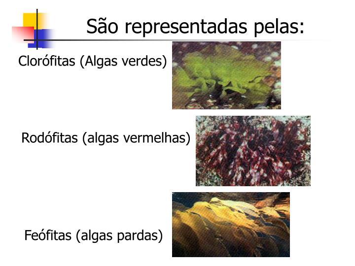 São representadas pelas: