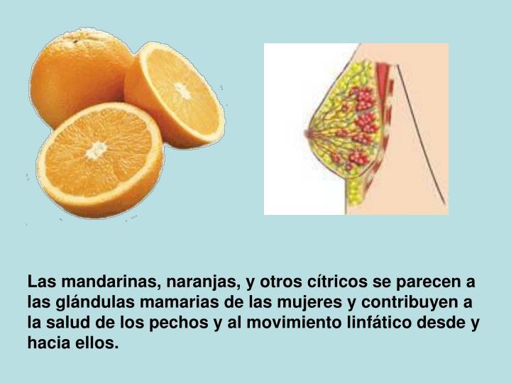 Las mandarinas, naranjas, y otros cítricos se parecen a las glándulas mamarias de las mujeres y contribuyen a la salud de los pechos y al movimiento linfático desdey hacia ellos.