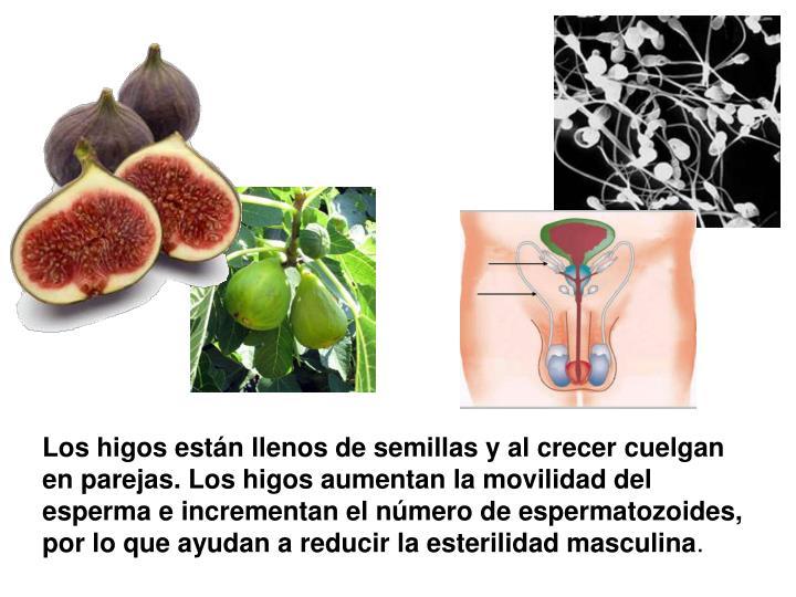 Los higos están llenos de semillas y al crecer cuelgan en parejas. Los higos aumentan la movilidad del esperma e incrementan el número de espermatozoides, por lo que ayudan a reducir la esterilidad masculina