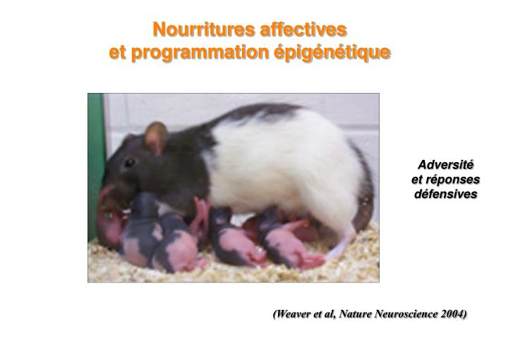 Nourritures affectives