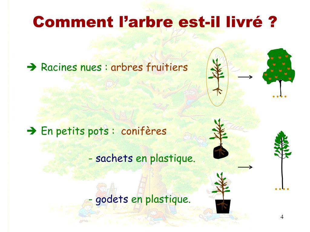 Comment Planter Un Arbre Fruitier ppt - aujourd'hui, je plante un arbre powerpoint