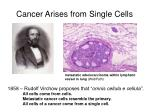 cancer arises from single cells