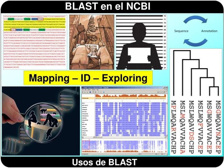 Mapping – ID