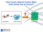 how could a mutant protein make cells divide out of control