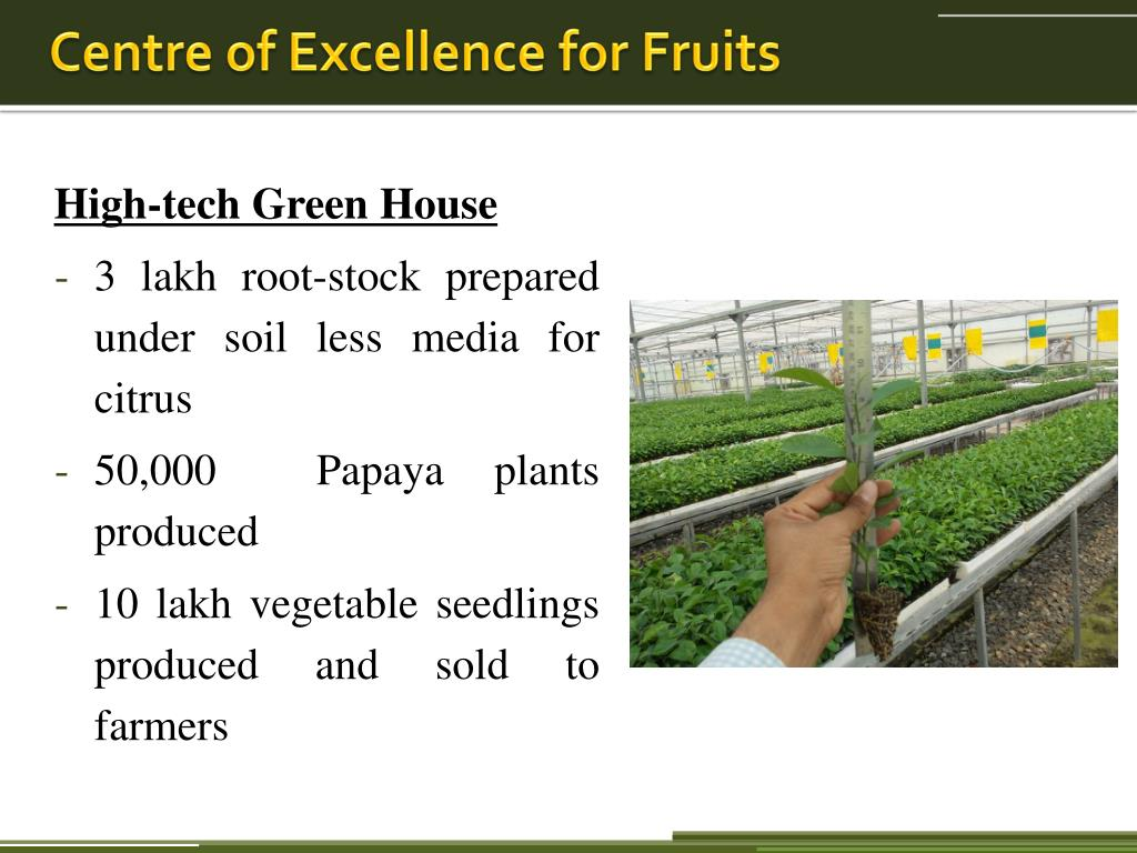 PPT - Indo – Israel cooperation in Horticulture PowerPoint