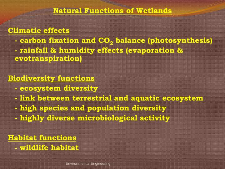Natural Functions of Wetlands