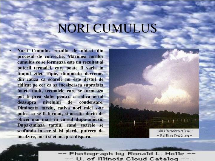 NORI CUMULUS