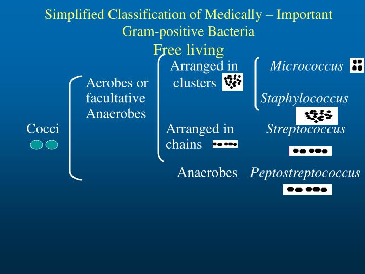 Simplified Classification of Medically – Important Gram-positive Bacteria