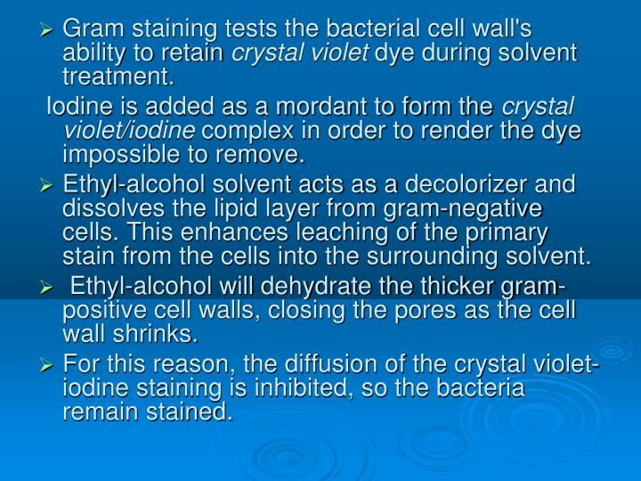 Gram staining tests the bacterial cell wall's ability to retain