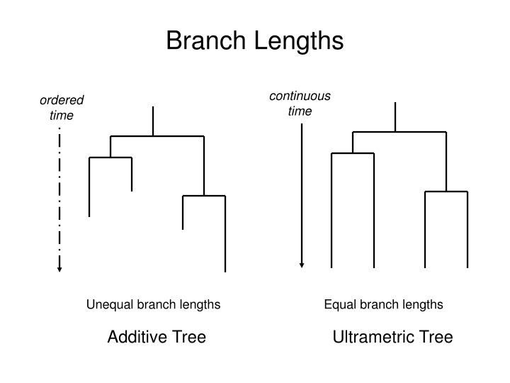 Branch Lengths