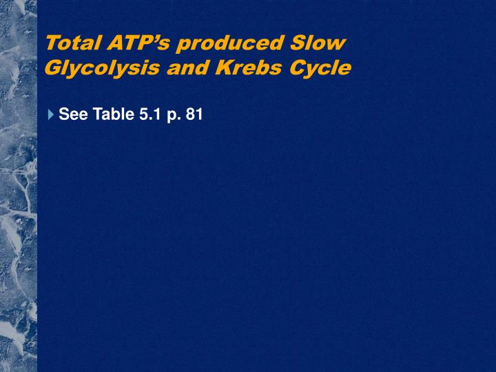 Total ATP's produced Slow Glycolysis and Krebs Cycle