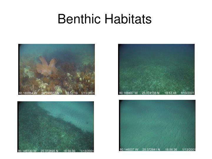 Benthic Habitats