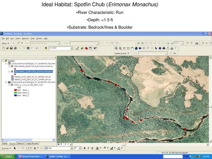 Ideal Habitat: Spotfin Chub (