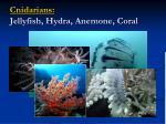cnidarians jellyfish hydra anemone coral