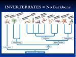 invertebrates no backbone