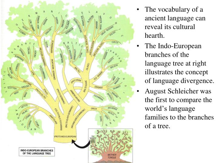 The vocabulary of a ancient language can reveal its cultural hearth.
