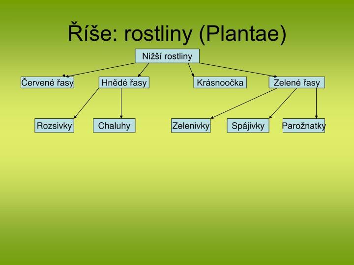 E rostliny plantae