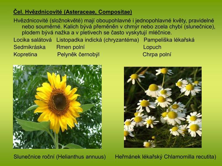 Čel. Hvězdnicovité (Asteraceae, Compositae)