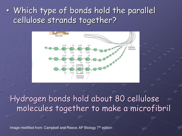 Which type of bonds hold the parallel cellulose strands together?