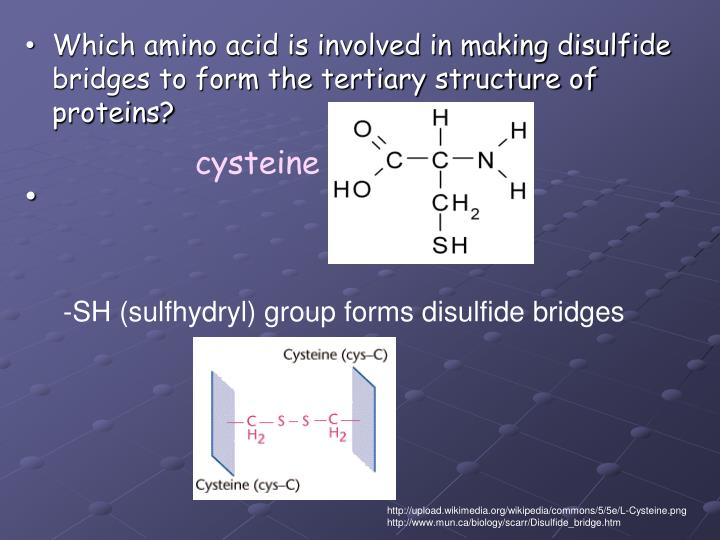 -SH (sulfhydryl) group forms disulfide bridges