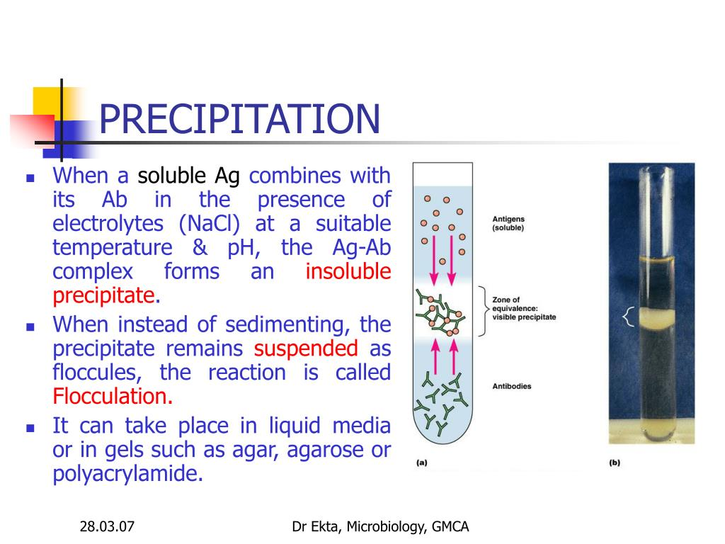 PPT - Serological Reactions PowerPoint Presentation, free