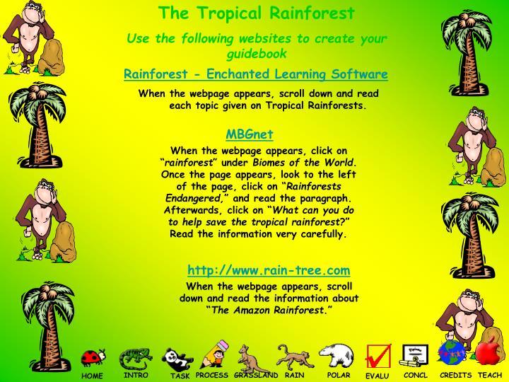 The Tropical Rainforest