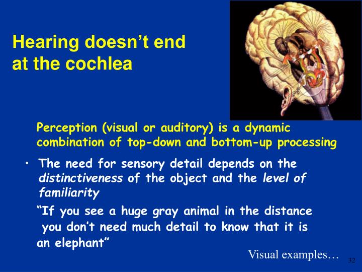 Perception (visual or auditory) is a dynamic combination of top-down and bottom-up processing