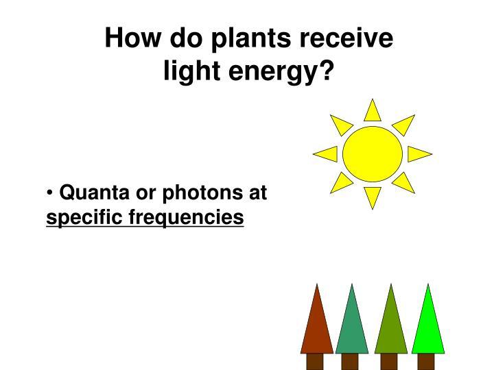 How do plants receive light energy?