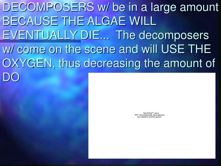 DECOMPOSERS w/ be in a large amount BECAUSE THE ALGAE WILL EVENTUALLY DIE...  The decomposers w/ come on the scene and will USE THE OXYGEN, thus decreasing the amount of DO