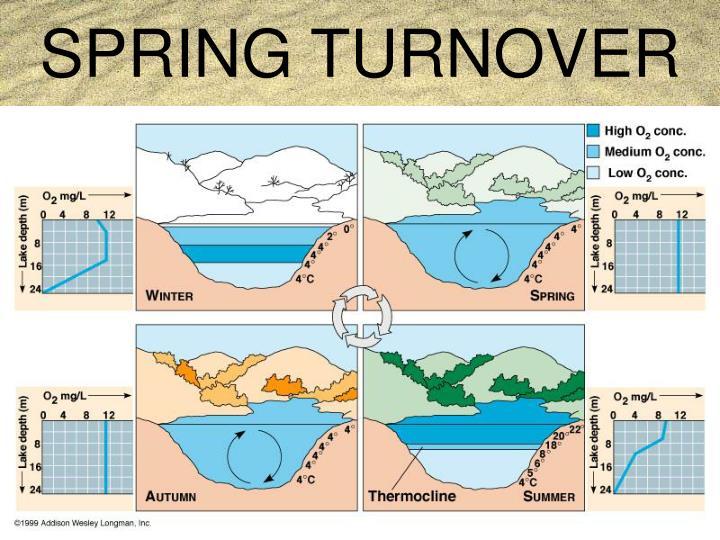 SPRING TURNOVER