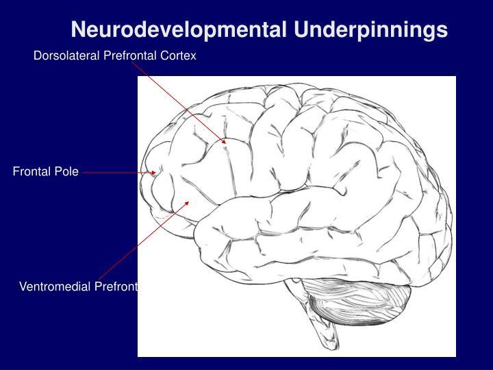Neurodevelopmental Underpinnings