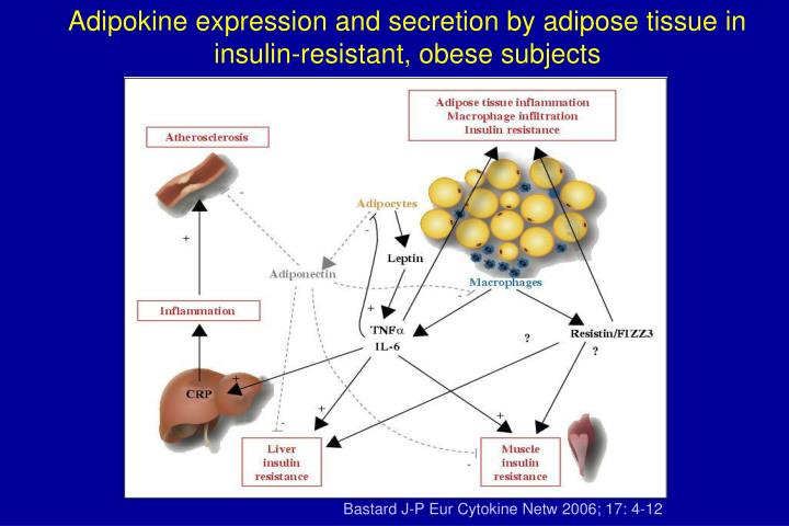 Adipokine expression and secretion by adipose tissue in insulin-resistant, obese subjects