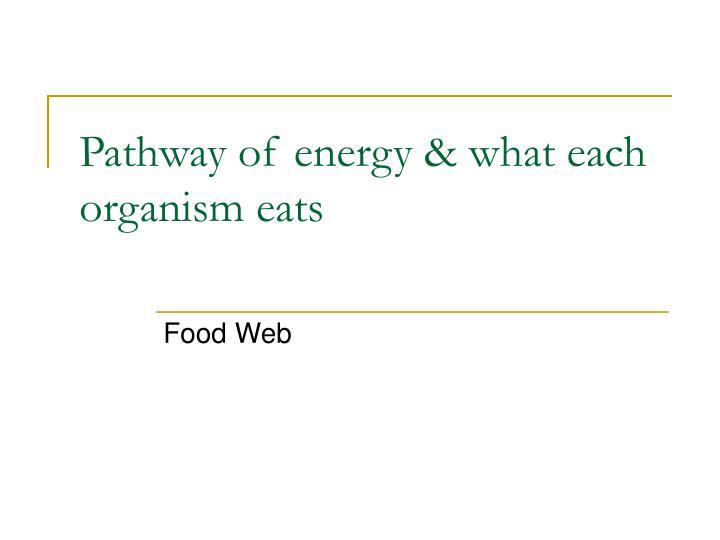 Pathway of energy what each organism eats