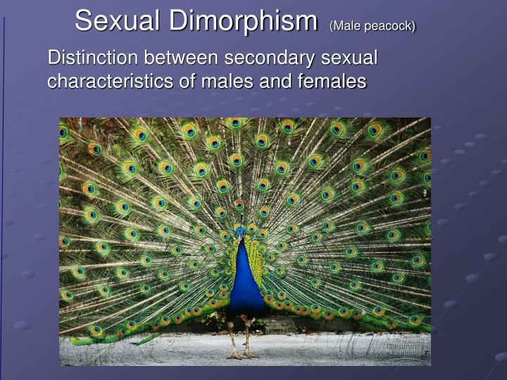 characteristics of males and females Introduction to gender and sexuality or physiological differences between male, female having some combination of male and female sex characteristics.