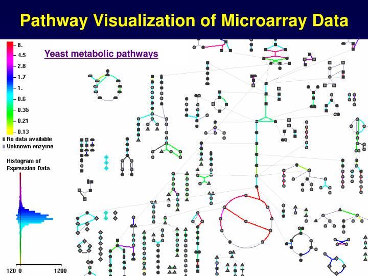 Pathway Visualization of Microarray Data