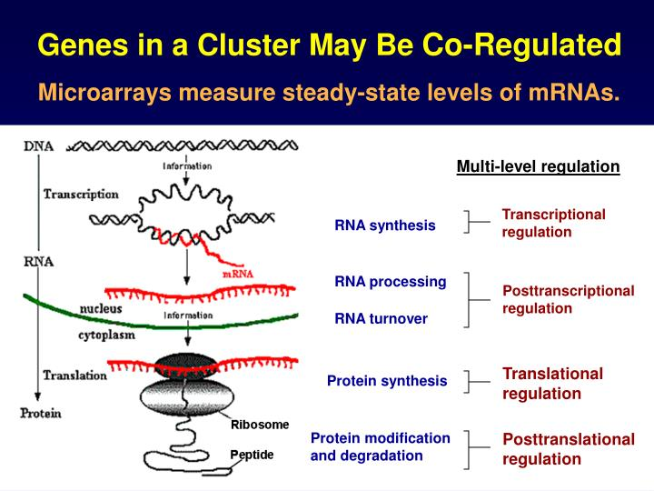 Genes in a Cluster May Be
