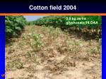 cotton field 2004