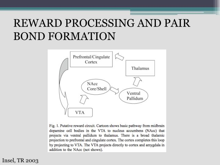 Reward processing and pair bond formation